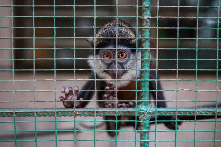 Ethiopian Airlines linked to 'dangerous' exotic pet trade