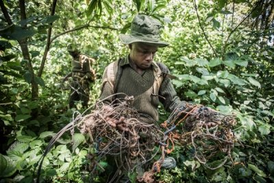 Rangers from Kenya's Sheldrick Wildlife Trust remove snares. Images courtesy of Sheldrick Wildlife Trust, Harnas and Tacugama.